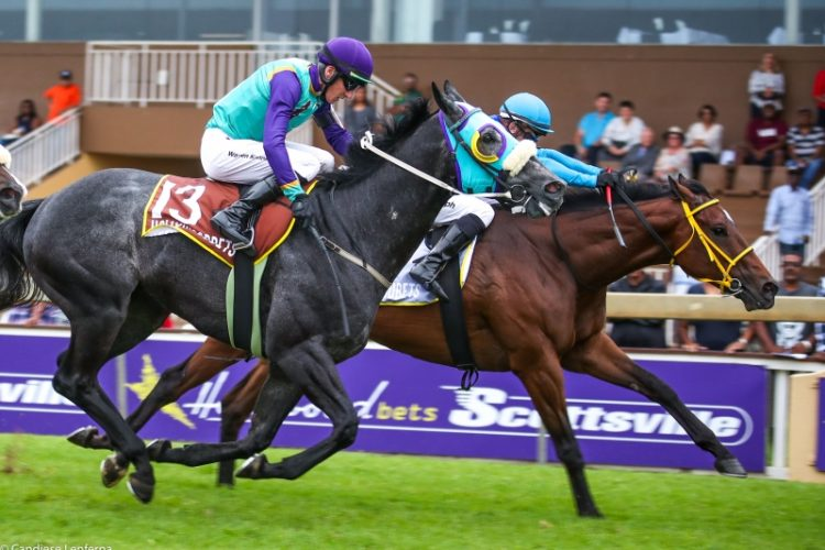 Windy Flight wins at Scottsville for Spies Racing