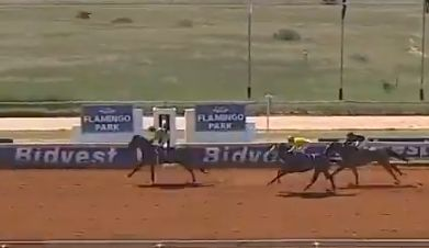 Singfonico wins at Flamingo Park for Spies Racing